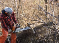 Fuelwood permits are free in 2020; apply online now