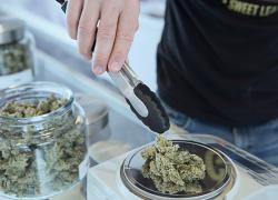 City votes to permit marijuana businesses 6-1