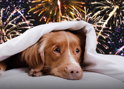 Kent County Animal Shelter Provides Guidance on Pets and Fireworks