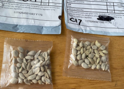 MDARD issues advisory regarding unsolicited packages of seeds from China