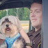 Deputy finds and returns lost dog