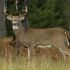 Deer check and CWD/TB testing changes for 2020 hunting season