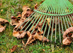 Doing fall yard cleanup? Don't forget to check for a burn permit