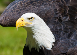 Break out your binoculars for bald eagles