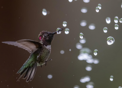 2021 Audubon Photography Awards open 12th Year of competition