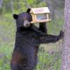 Be black bear SMART from start of spring