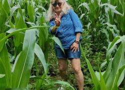 Corn more than knee high