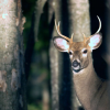 Northern Michigan deer hunting headed for a comeback