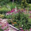 Flower garden in bloom