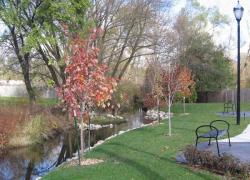 City receives tree grant