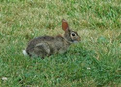 Protecting your landscape from wildlife damage