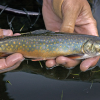DNR fisheries experts offer opening-day tips