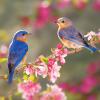 Is your yard wildlife-friendly?