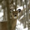 DNR reports 2014 deer hunting harvest down across Michigan