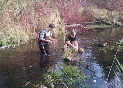 Students use leaf packs to monitor Cedar Creek