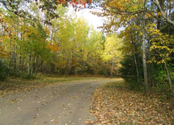 Fall colors nearing prime