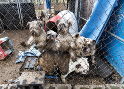 Fifty dogs seized from puppy mill in Mio