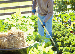 Low Maintenance Vegetable Gardening for a Bountiful Harvest