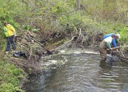 Volunteers clean up city
