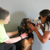 Kent County Service animals receive eye exams at Mounted Unit