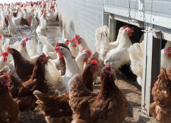 Report could be a wake-up call forantibiotic reform