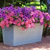 Five top trends in container gardening