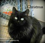 PET-christmas-for-Cedar