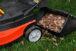 AWE-Mow-don't-rake-leaves--