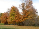 Fall-Colors1