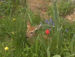 N-Bambi2