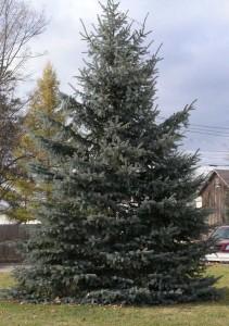 N-Christmas-tree