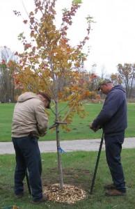 N-Tree-grant2-cemetery