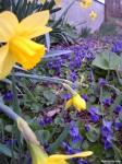 N-Spring-Flowers-Tyler-Felt