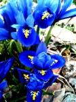 N-Spring-flowers-Craig-Owen