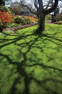 DIG-Spring-lawn-and-landscape