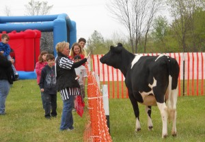 Denise Gates gives Candy the cow the rules.