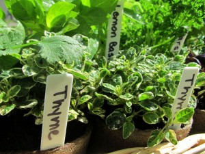 DIG-Edible-plants