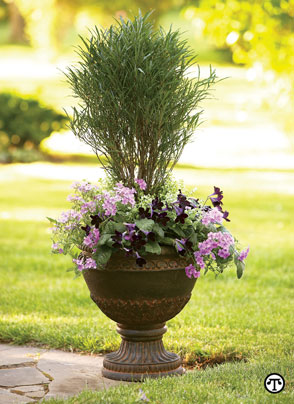 Whether you mix them with annuals and perennials or use them on their own, adding shrubs to your container garden makes good sense.