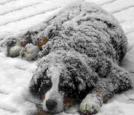 _N-Pets-in-cold-weather