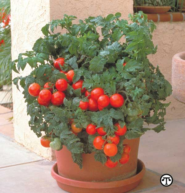 Container gardening choosing the right plant for the pot cedar springs post newspaper - Soil for container vegetable gardening ...