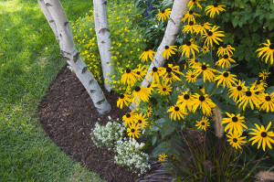 Radically Reduce Garden Maintenance