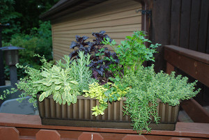DIG-Creative-ways-Patio-container-garden