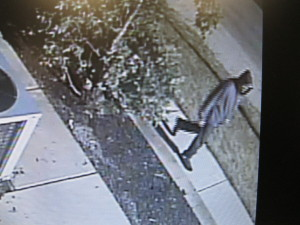 Suspect in robbery caught on surveillance video.