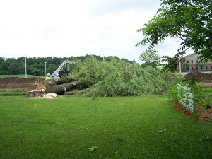 N-willow-trees-taken-down-005