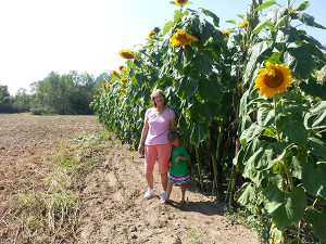 AWE-Sunflower-Ostrom