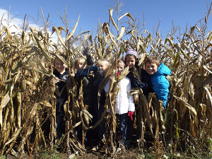 A group of students from Mr. Harmon's class peeks through the corn. Post photo by J. Reed.