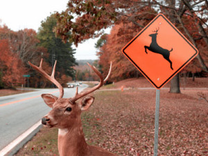 N-deer-collisions