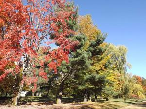 _Trees3