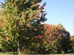 _Trees4