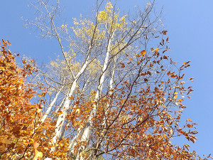 _Trees8
